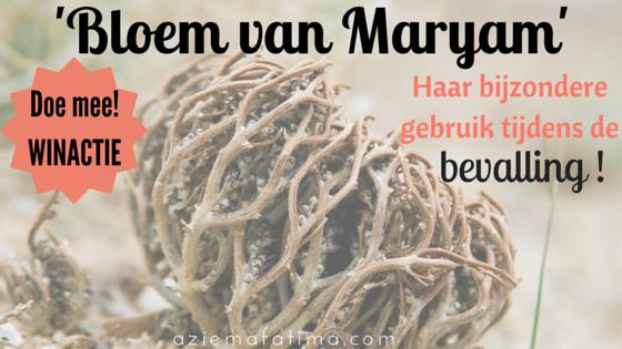 Bloem van Maryam: Haar bijzondere gebruik tijdens de bevalling!